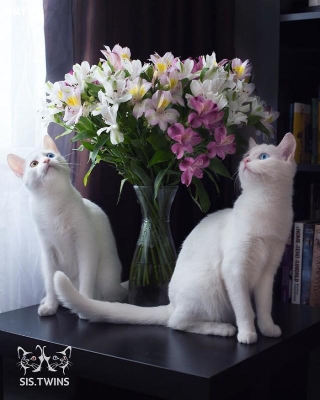 Chúng thích chiêm ngưỡng những thứ xinh đẹp như hoa,thú cưng