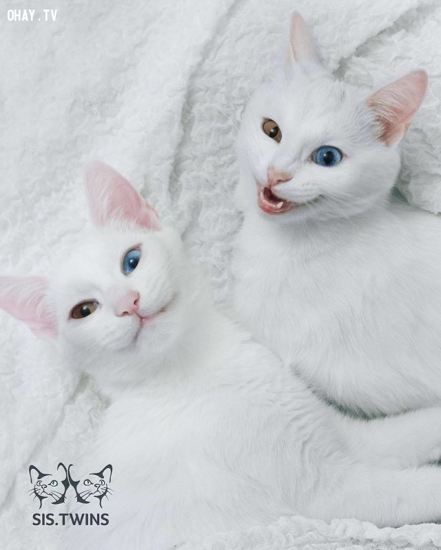 Mặc dù trông chúng rất giống nhau nhưng tính cách thì khác nhau hoàn toàn,thú cưng