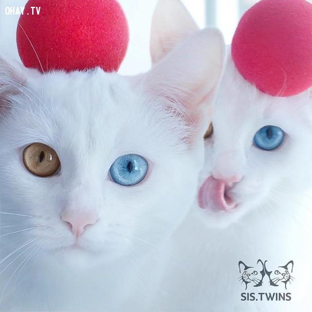 Chúng đã từng được giới thiệu trên trang dành cho mèo phổ biến nhất @cats_of_Instagram ,thú cưng