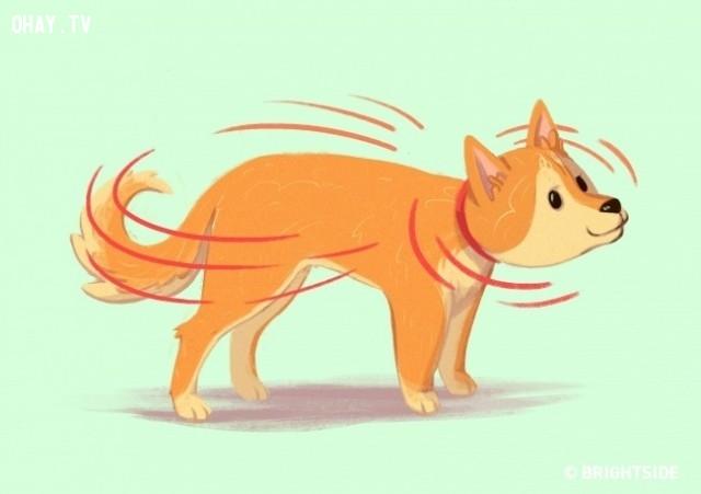 ,ngôn ngữ chó,ngôn ngữ,thú cưng,ngôn ngữ cơ thể