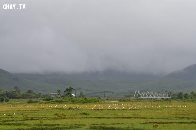 Cận cảnh cánh đồng bẫy cò ở Thôn Trung An, xã Lộc Trì, huyện Phú Lộc, tỉnh Thừa Thiên Huế.,miền Trung,bẫy cò,bẫy chim