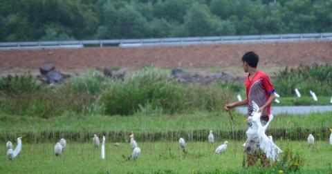 Bẫy cò ở miền Trung vào mùa mưa bão