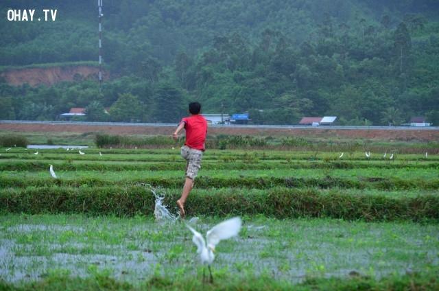 ,miền Trung,bẫy cò,bẫy chim