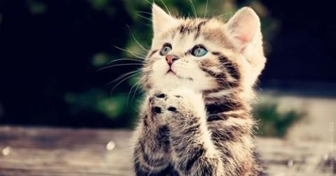12 lợi ích sức khoẻ khi nuôi Mèo