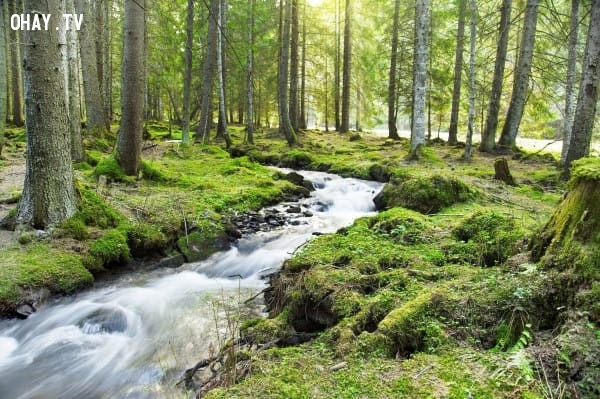 Hình 2: Dòng suối trong rừng,trắc nghiệm vui,trắc nghiệm tính cách