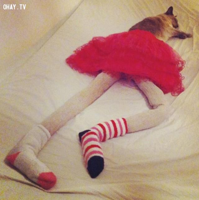 ,mèo,chân dài,sẽ ra sao