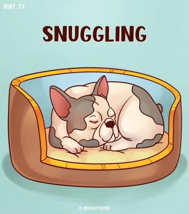2. Nằm cuộn tròn,tư thế ngủ,tính cách cún cưng,tính cách của loài chó,trắc nghiệm vui