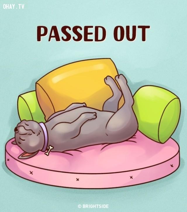 6. Nằm ngửa,tư thế ngủ,tính cách cún cưng,tính cách của loài chó,trắc nghiệm vui