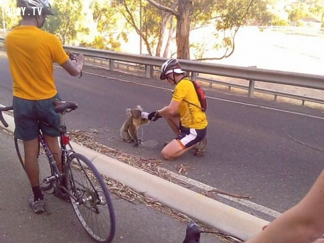 Cặp đôi đạp xe dừng lại cho một chú sóc bên lề đường uống nước,hình ảnh đẹp,cử chỉ đẹp