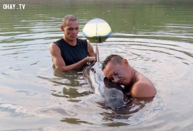 Hia người đàn ông cứu chú cá voi nhỏ khi nó bị lạc,hình ảnh đẹp,cử chỉ đẹp