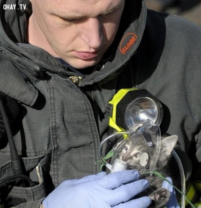 Anh chàng cứu hỏa đặt bình oxy cho con mèo nhỏ vừa được cứu thoát từ đám cháy,hình ảnh đẹp,cử chỉ đẹp