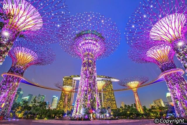 Cây Neon - một biểu tượng mới của Singapore,Singapore,Đảo quốc sư tử