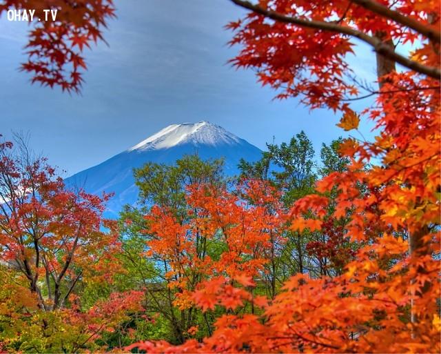 MÙA THU NHẬT BẢN,mua thu paris,mùa thu Hà Nội,mùa thu Nhật Bản