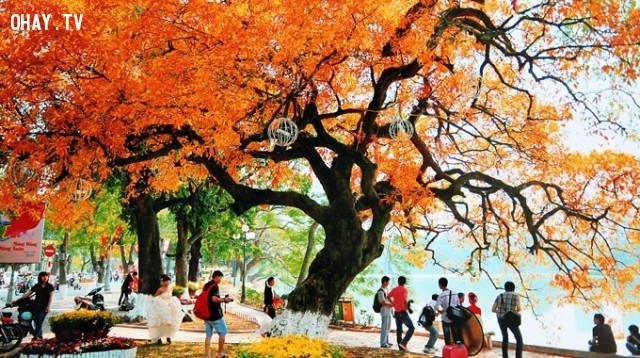 MÙA THU HÀ NỘI,mua thu paris,mùa thu Hà Nội,mùa thu Nhật Bản