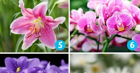 Chọn bông hoa mà bạn thích và xem nó nói gì về bạn