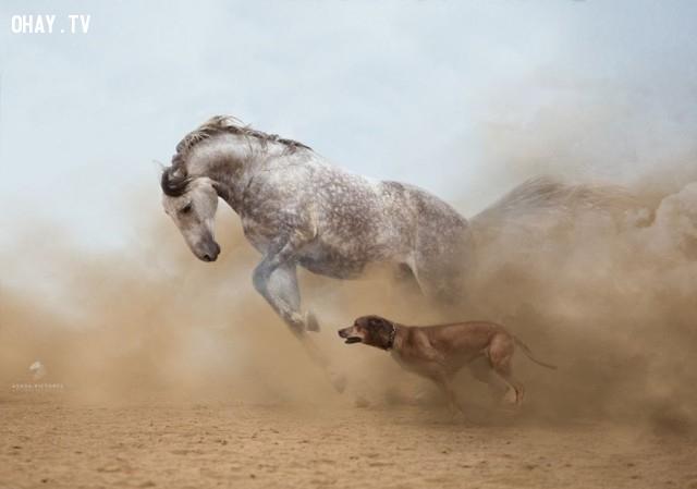 Ai nhanh hơn,khoảnh khắc ấn tượng
