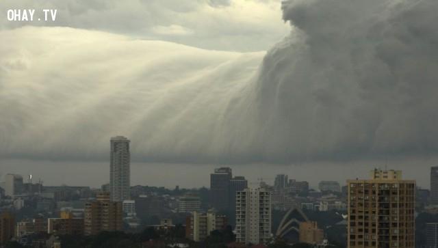 Sóng thần ở Sydney,khoảnh khắc ấn tượng
