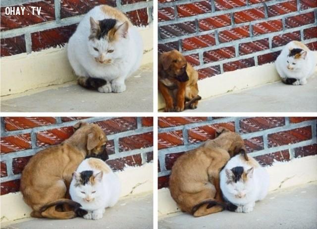 Chó và mèo,khoảnh khắc ấn tượng