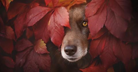Mùa thu của những chú chó qua lăng kính nhiếp ảnh gia