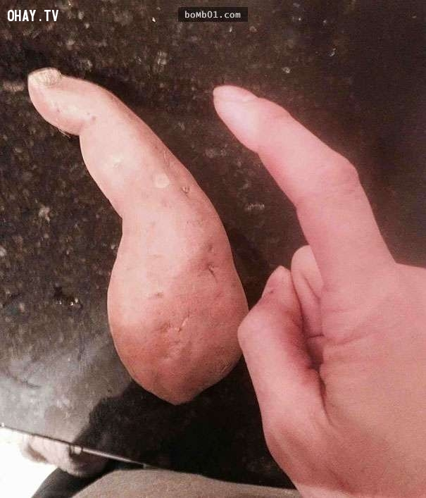 Củ khoai lang quá giống với ngón tay trỏ ,hình ảnh kỳ lạ,rau củ quả