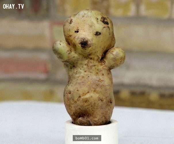 Thêm một củ khoai tây có hình dáng của chú gấu nhỏ,hình ảnh kỳ lạ,rau củ quả