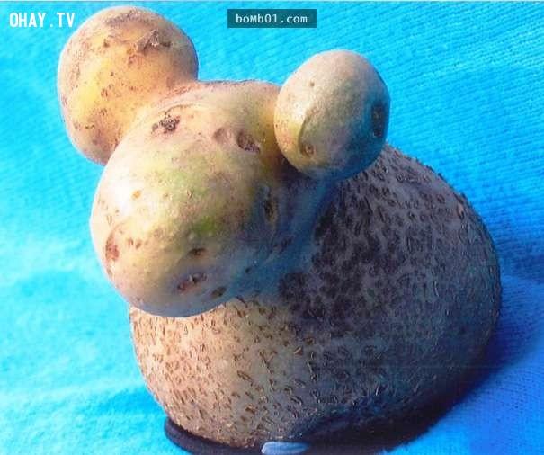 Củ khoai tây có hình dáng của chú cừu đáng yêu,hình ảnh kỳ lạ,rau củ quả