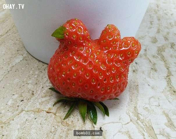 Quả dâu tây trông giống chú gà mái nhỉ?  ,hình ảnh kỳ lạ,rau củ quả