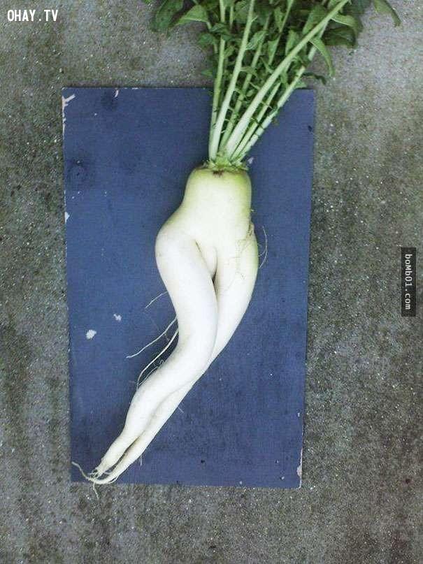 Củ cải cũng có những đường cong quá hoàn hảo,hình ảnh kỳ lạ,rau củ quả