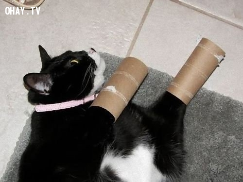 10. Dùng để trêu đùa những chú mèo,lõi giấy vệ sinh,sáng tạo
