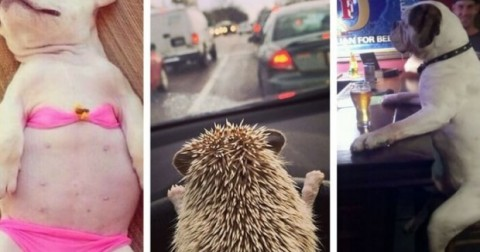 Cười té ngửa với hình ảnh khi con vật làm công việc của con người