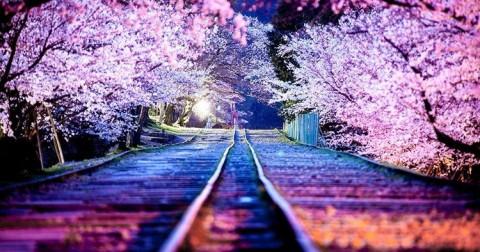 Chùm ảnh Nhật Bản - vẻ đẹp truyền thống hài hòa giữa cuộc sống hiện đại