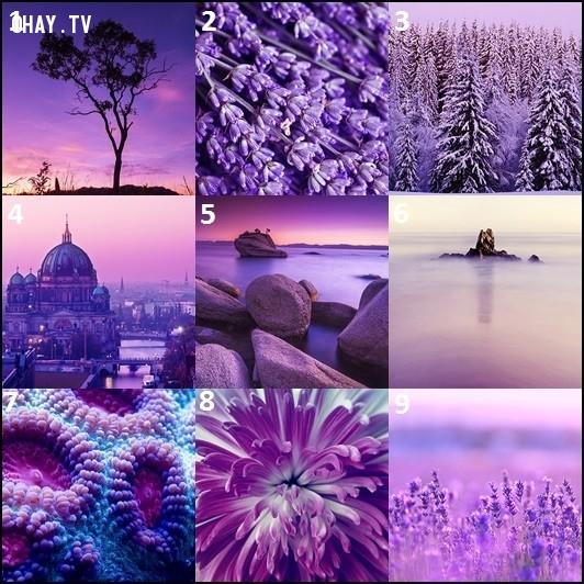 Hình ảnh nào dưới đây mà bạn thấy thu hút và ấn tượng nhất? Chọn một hình và kéo xuống dưới xem đáp án nhé!,trắc nghiệm vui,trắc nghiệm tính cách,màu tím