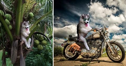 Chú chó bị mắc kẹt trên cây dừa và những biến thể siêu đáng yêu