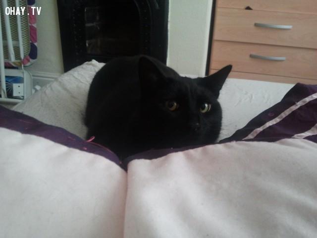 4. Em mèo kiêm luôn đồng hồ báo thức,nuôi mèo,thú cưng