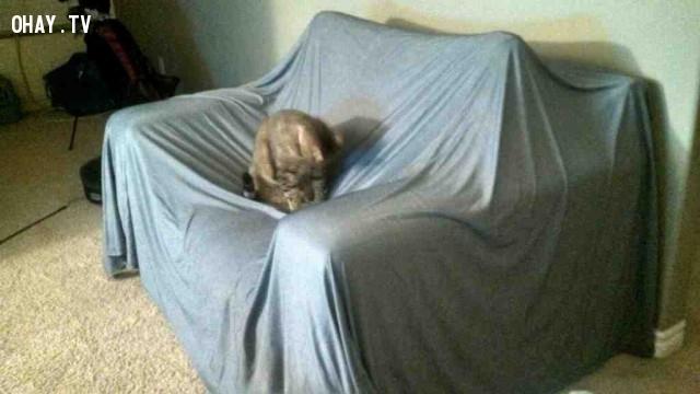 """5. Đồ nội thất của bạn nhìn rất """"đáng yêu"""",nuôi mèo,thú cưng"""
