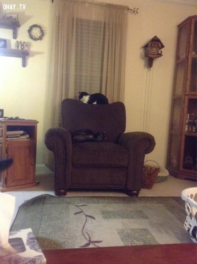 2. Bạn luôn biết em mèo ở đâu,nuôi mèo,thú cưng
