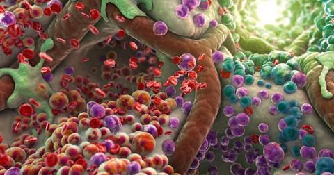 Ngắm các tế bào trong cơ thể được phóng đại lên gấp hàng triệu lần