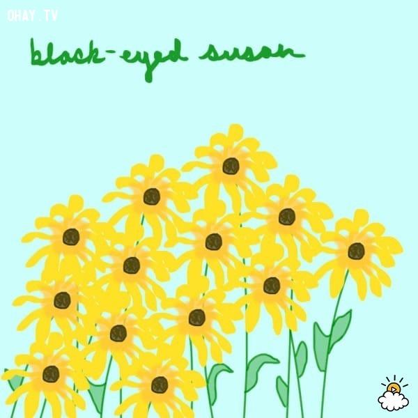 3. Hoa cúc Susan mắt đen,trắc nghiệm vui,trắc nghiệm tính cách,bói dạo,loài hoa yêu thích