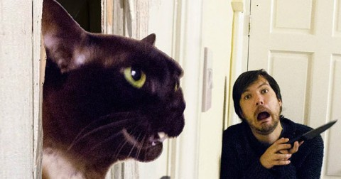Anh chàng này và con mèo của anh ấy đã nhại lại các cảnh phim nổi tiếng một cách cực kỳ vui nhộn