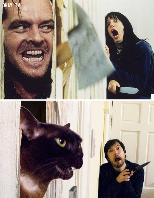 """04. Một cảnh trong phim The Shining - khuôn mặt đen thui của tên tội phạm quá """"nguy hiểm"""": ,cảnh phim,nổi tiếng,mèo,vui nhộn"""