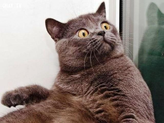 Khi ai đó buôn chuyện với bạn về thông tin nóng hổi mới nhất.,thú cưng,mèo cưng,đi làm