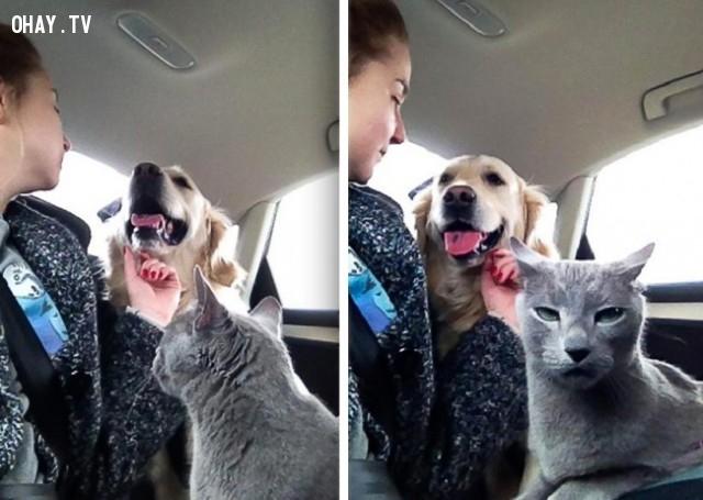 Khi sếp có được nhân viên yêu thích mới thay vì bạn!,thú cưng,mèo cưng,đi làm