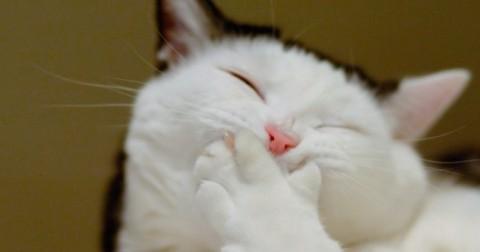 Đây là biểu cảm của những chú mèo khi chúng cũng đi làm như bạn