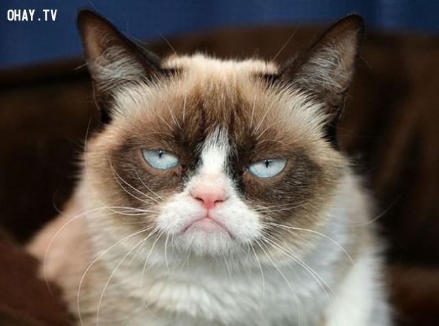 Khi sếp bạn kể một câu chuyện cười nhạt nhẽo ...,thú cưng,mèo cưng,đi làm