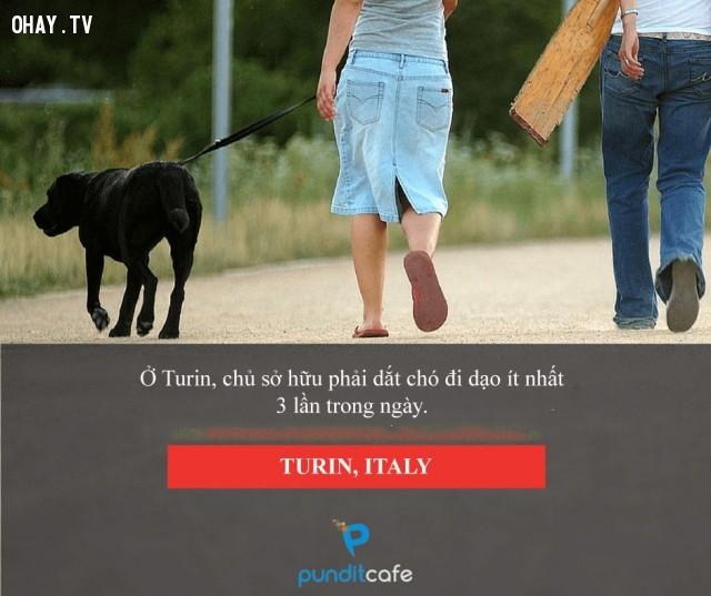 Không dắt chó đi dạo, bị phạt - Turin (Itali),luật lệ,những điều thú vị trong cuộc sống,chuyện lạ
