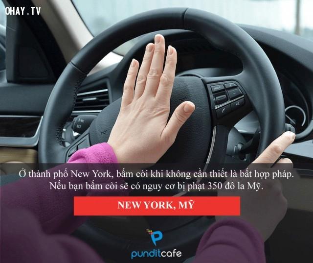 Suy nghĩ kỹ trước khi bóp còi - New York (Mỹ),luật lệ,những điều thú vị trong cuộc sống,chuyện lạ