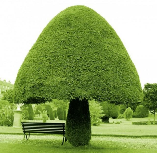Cây hình cây nấm,thực vật,cây cối,loài cây lạ