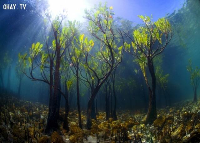 Cây xoài dưới nước,thực vật,cây cối,loài cây lạ