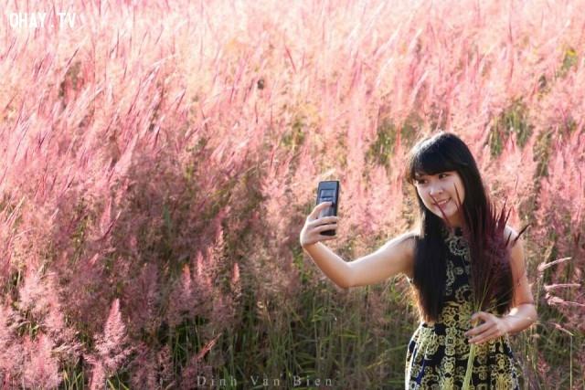 Cánh đồng hoa cỏ hồng ở Đà Lạt,cánh đồng hoa