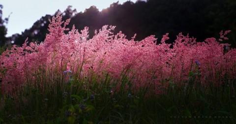 Những cánh đồng hoa tuyệt đẹp ở Việt Nam